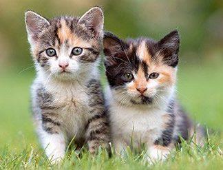 Emergency Cat Kits