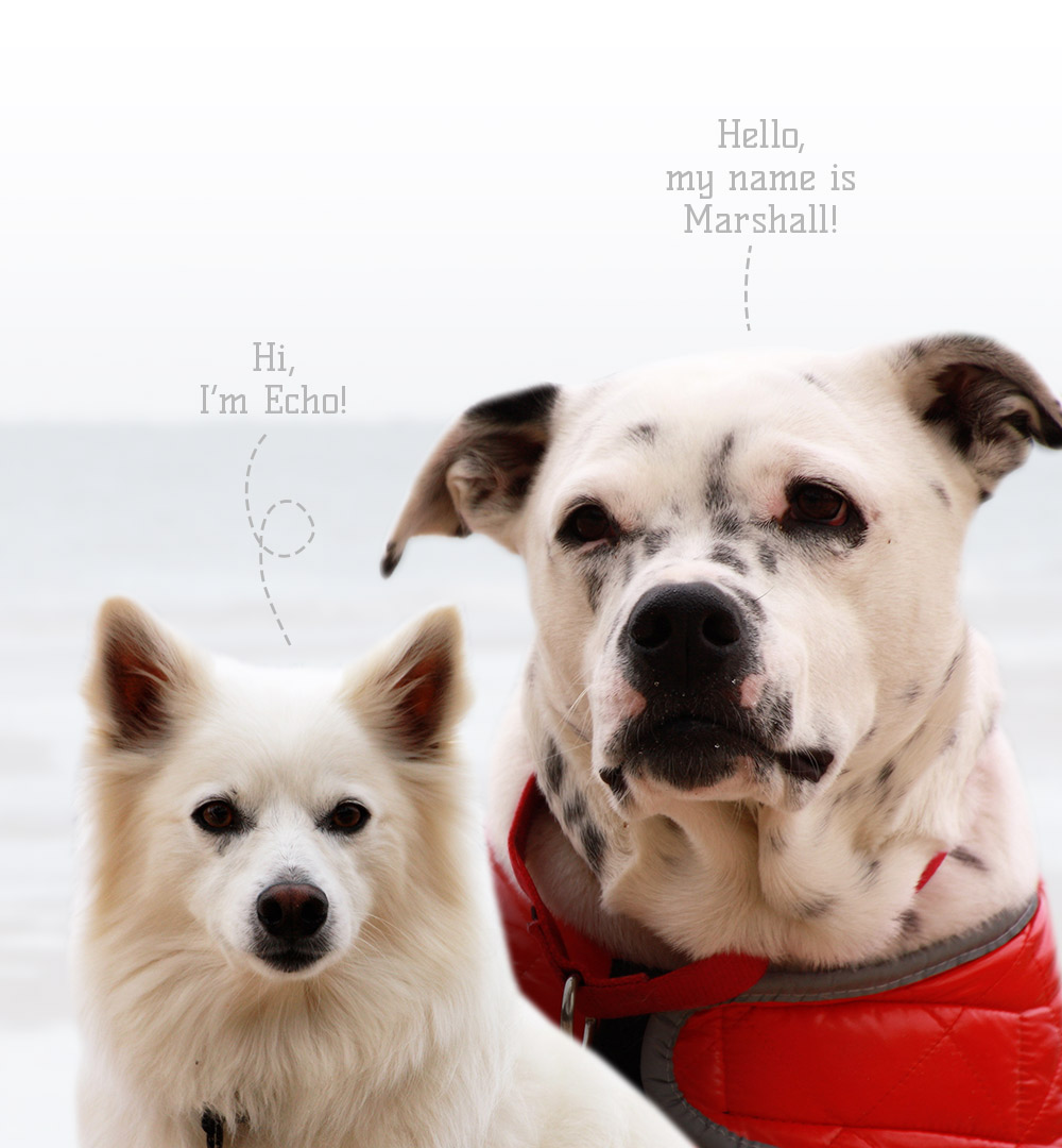 Echo & Marshall Pet Evac Pak Spokesdogs