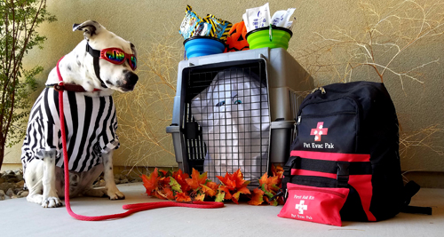 pet evacuation kits
