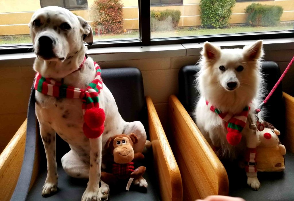Marshall and Echo Therapy Dogs