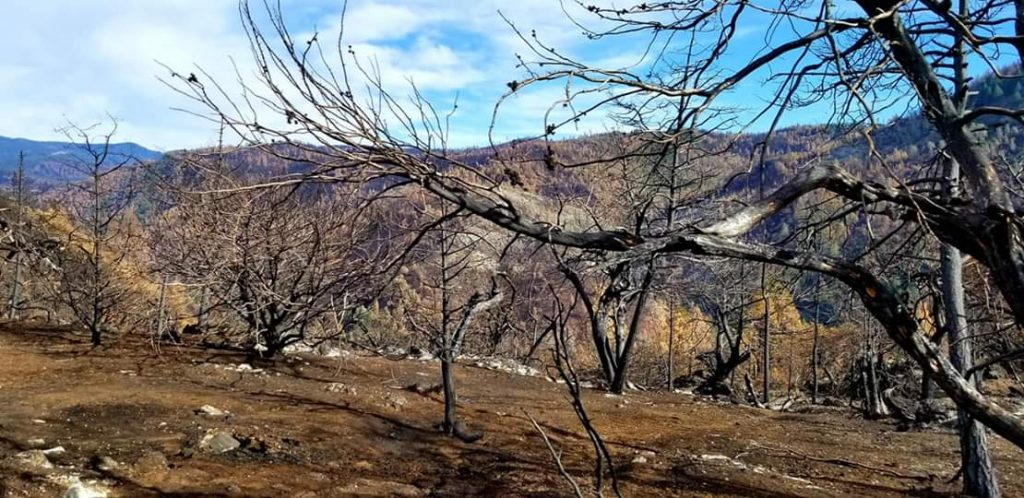 Damage from Camp Fire, CA