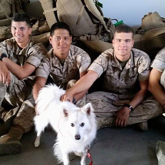 Echo visiting USMC with Paws 4 Passengers